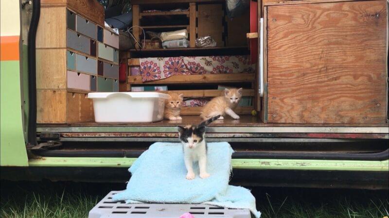 Van life cats 赤ちゃん猫と車中泊