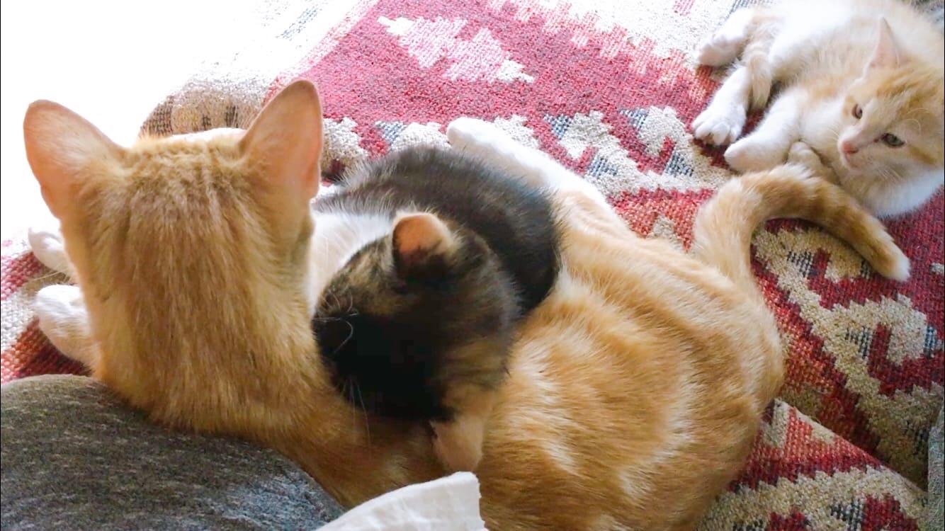 猫 親子 sweet cat family