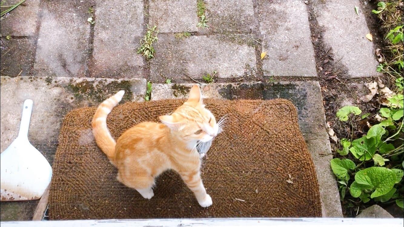 cat mouse 猫とねずみ