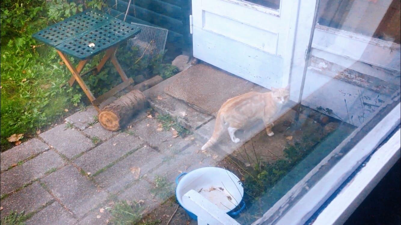 cat bring mouse ねずみ 猫 連れて帰ってくる